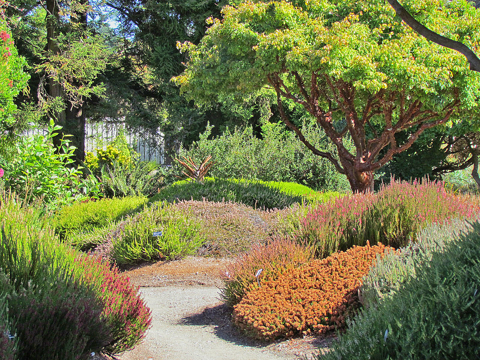 Mendocino coast botanical gardens well worth a visit for Outdoor landscaping